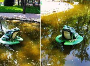 жаба в пруду