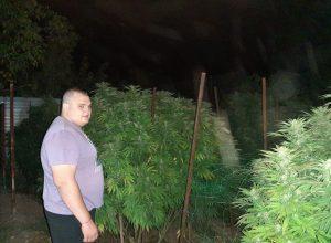 По $2500 за точку: под Мелитополем обнаружены конопляные деревья под «крышей» полиции